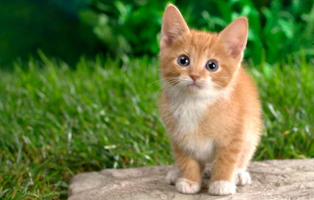 Nombres de gatos for Como ahuyentar gatos del jardin